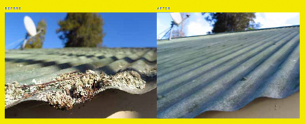 Roof repairs Kapiti | Roof cleaning Moss removal Palmerston